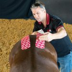 RockTape Equine Kinesiology Tape